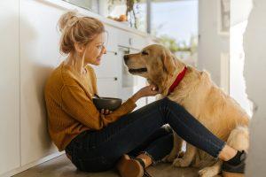 Aseguranzas para perros: cómo funcionan y cuáles son las mejores