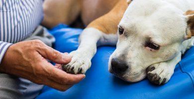 Programas de ayuda para mascotas de personas con bajos ingresos