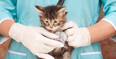 Seguro de vida para mascotas. ¿Valen la pena?